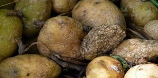 Russian-family-had-lost-their-lives-over-toxic-potatoes-fumes
